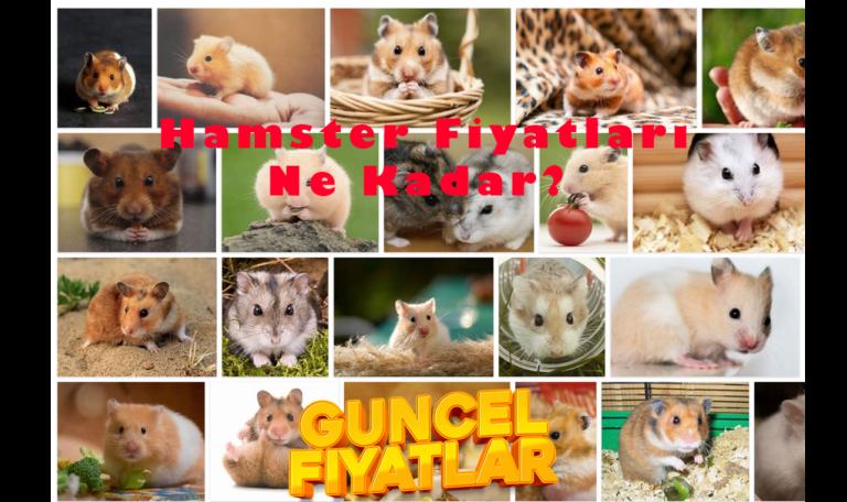 Hamster Fiyatları Ne Kadar